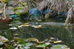 Oczko wodne przed zimą