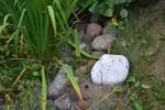 Oddam kamienie polne