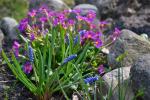 Wiosennie, zielono, urokliwie…